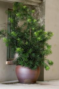 pottedplants01